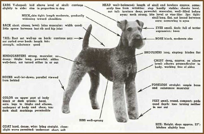 Airedale Structure